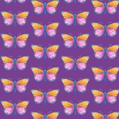 Medium small butterflies, colourful on light purple || shirt top blouse night gown woman dress fun trendy man men girl kid women
