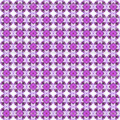 Purple Delision