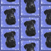 Rrblack_lab_portrait_in_blue__shop_thumb