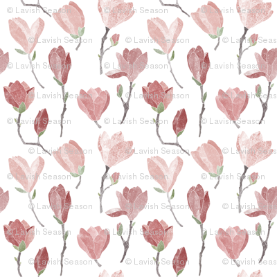Pink magnolia blooms on white