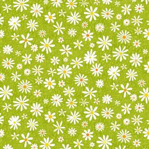 small daisy...daisy...
