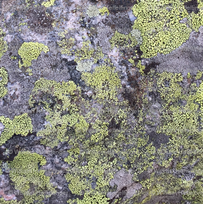 Vail Rock Moss