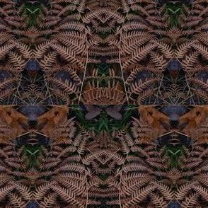 Ferns in Fall