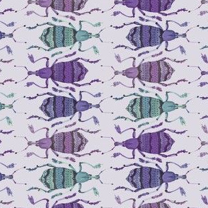 Weevil Waltz in Light Lavender