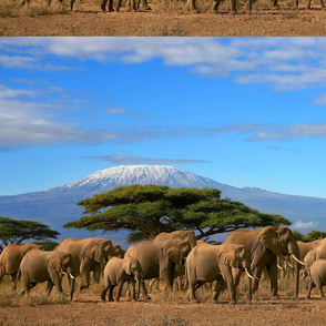 A_herd_of_elephants_at_the_foreground_of_mount_Kenya
