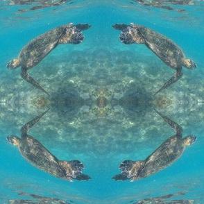 sea turtles, puako 2