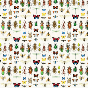 The Usual Suspects - insects on white - small