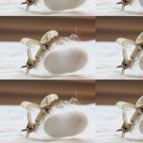 Mating Silk Moths