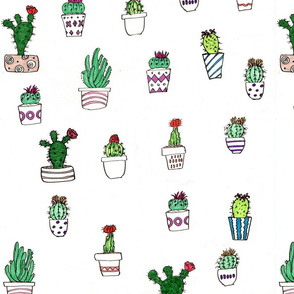 cactipattern