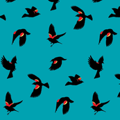 Red-winged Blackbirds - Blue