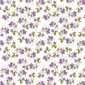 Purple grace