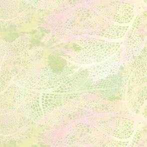 Sea_Green_Murex_bg-150
