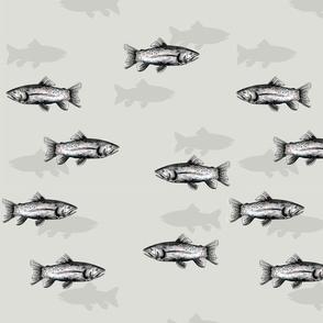 Fish Shadows