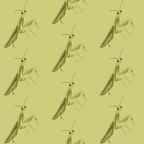 Mantis on Green - Large Print Version