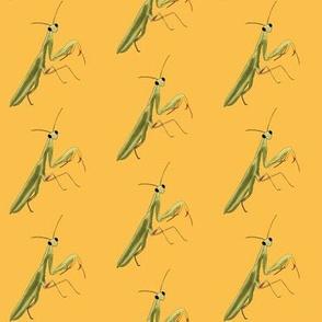Mantis on Yellow - Large Print Version
