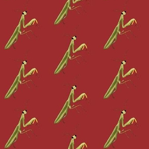 Mantis on Red - Large Print Version