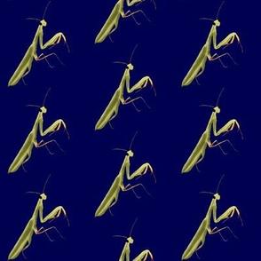 Mantis on Navy Blue - Large Print Version