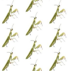 Mantis on White - Large Print Version