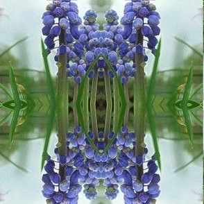 Muscari Reflected in Pond - small scale