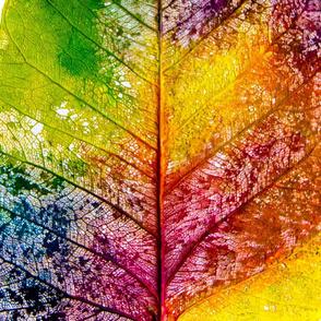 Leaf Skeleton in Rainbow