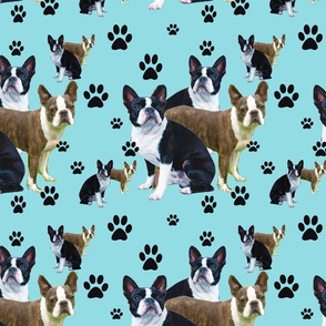Seamless boston Terrier design