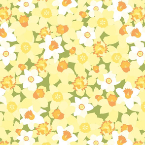 Gorgeous daffodils