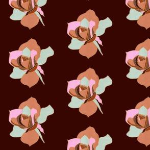 Carmel Rose 4