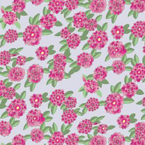 Lavender Background Pink Dahlietta / Dahlia
