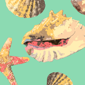 Sea Shells on Aqua