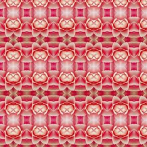 Fuscia Blossoms