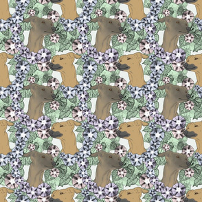 Floral Italian Greyhound portraits B