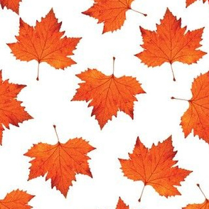 Maple_Leaf_