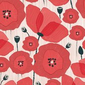 Poppies-01_shop_thumb