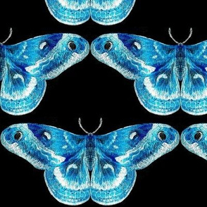 Luminous Blue Mystic Moth with Black Background