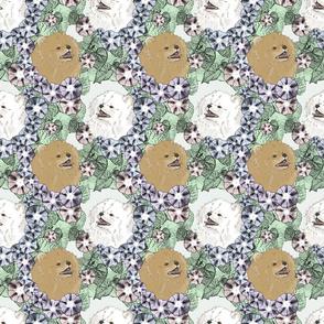 Floral Pomeranian portraits B
