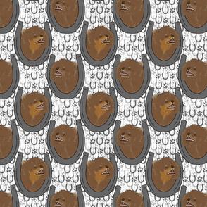 Pomeranian horseshoe portraits D