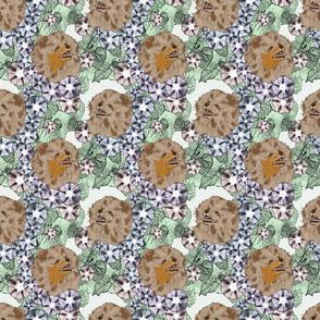 Floral Pomeranian portraits F
