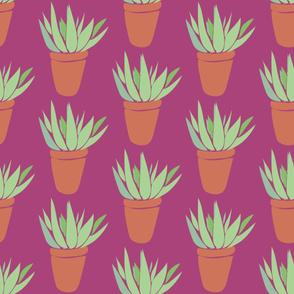 Aloe Pattern