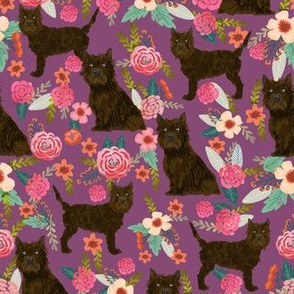 Cairn terrier brown coat floral purple