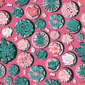 Succulent pots 3 // pink background