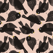 Blackbirds on peach