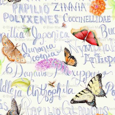 ButterflySketchbook