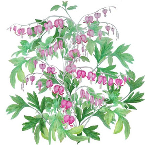 bleeding heart_bush2