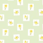 Manzanilla  flowers