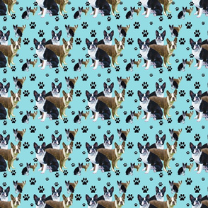 seamless_boston_terrier__blue_backgr