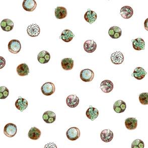 Succulent Dots