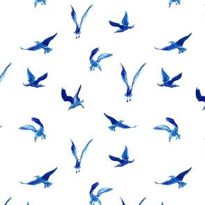 Arctic seagulls // måsa