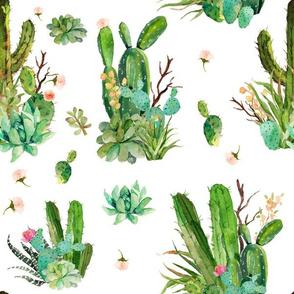 """12"""" Cactus Garden"""