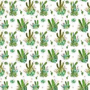 """2"""" Cactus Garden"""