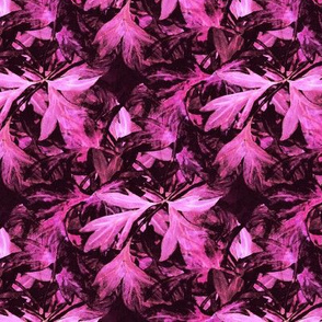 Bleeding_heart_dark pink_bunch_leaves_inverse
